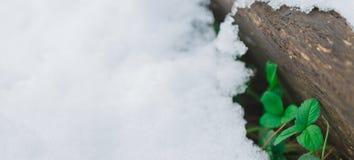 Logga beläggning med snö och de första gräsplansidorna fotografering för bildbyråer