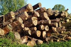 Logga skogsbruk En kulle av träjournaler, såg klippte träd 2 Arkivbild