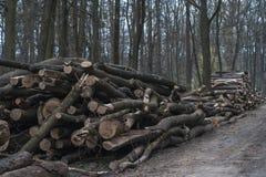 Logga - träjournaler av trän i skogen royaltyfri bild