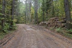 Logga vägen i nordliga Wisconsin royaltyfri fotografi