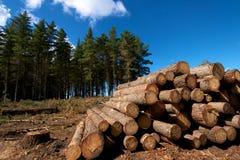 loggad för skog Arkivfoton