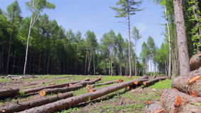 loggad för skog lager videofilmer