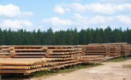 loggad för skog royaltyfria foton
