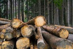 loggad för skog royaltyfria bilder