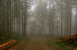 loggad för skogsbruk royaltyfri bild