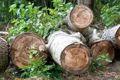 loggad för skog Arkivfoto