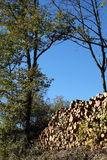 loggad oaktrees arkivfoton