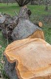 loggad trä royaltyfria foton