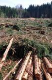 loggad trä arkivfoto