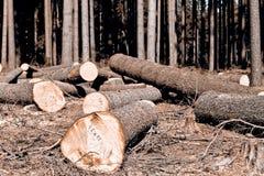 loggad trä royaltyfri foto