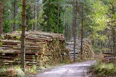 loggad väg Fotografering för Bildbyråer