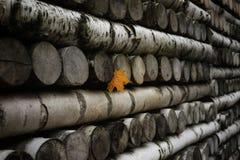 loggar den gula lönnväggen för bladet den wood bakgrundsnärbilden Fotografering för Bildbyråer