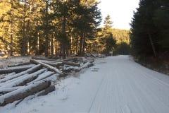 Loggar in den snöig vägen Arkivbild
