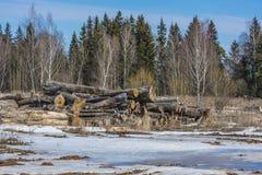 Loggar in en skogglänta Arkivfoto