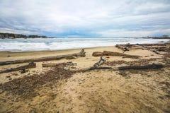 Loggar in kusten av en djupfryst flod Royaltyfri Fotografi