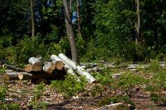 Loggar in skogen Fotografering för Bildbyråer