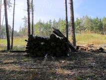 Loggar in skogen arkivbilder