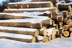 Loggar in vinter med snö Arkivbild