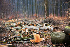 Logged Forest Stock Photography