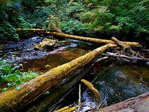Logged In. Logs in the creek at Camp Creek Campground - near Rhododendron, OR Royalty Free Stock Photo