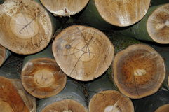 Logged trees background texture Royalty Free Stock Photos