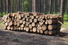Logged wood in forest Stock Photography