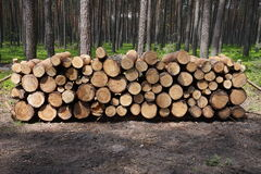 Logged wood in forest Stock Images