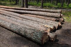 Logged wood in forest Stock Image