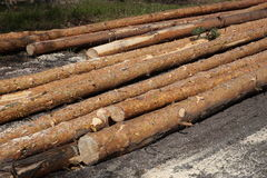 Logged wood in forest Stock Photos