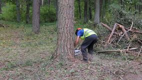 Lumberjack logger worker in protective gear cutting firewood timber tree in forest with chainsaw stock footage
