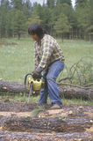 A logger cutting a  log Stock Photography