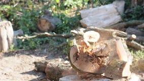 Logger Cutting Log stock video