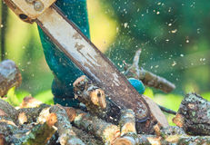 Logger man is cutting wood. They cut wood for making the furniture Royalty Free Stock Images