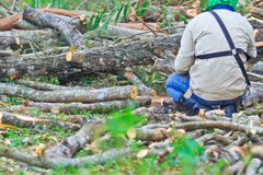 Logger man is cutting wood Royalty Free Stock Photos