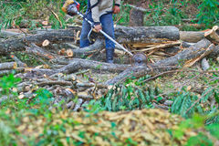 Logger man is cutting wood Royalty Free Stock Photo