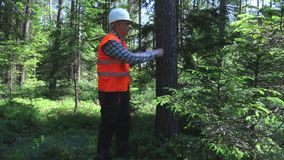 Logger near tree in forest. In summer day stock video footage