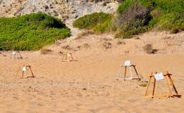 Loggerhead overzeese schildpad broedplaats Royalty-vrije Stock Afbeeldingen