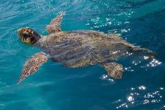 Loggerhead Sea Turtle. Swimming in the blue water near Zakynthos island - summer holiday destination in Greece stock image