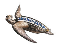 Loggerhead sea turtle. Has reached from Mexico Japan Stock Photography