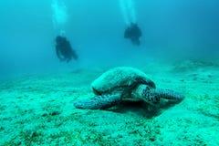 Loggerhead sea turtle Caretta caretta  with diver - Red Sea Stock Photography