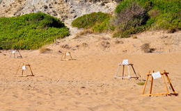Loggerhead sea turtle nesting site Royalty Free Stock Images