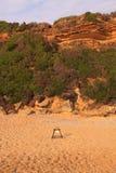 Loggerhead zeeschildpad broedplaats Royalty-vrije Stock Afbeeldingen