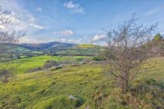 Loggerheads het Park van het Noord- land Wales Stock Afbeelding