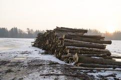 logging Хранение журналов отрезало длину на поле стоковые изображения