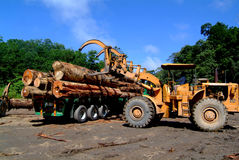 Logging. Crane transfer lumber to truck Stock Photo
