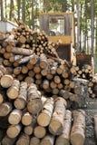 Logging Royalty Free Stock Photo