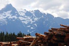 Free Logging Royalty Free Stock Photos - 21237698