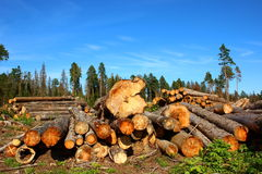 Logging. Logs in the logging in Russia at sunny day Royalty Free Stock Image
