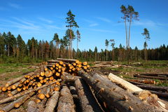 Logging. Logs in the logging in Russia at sunny day Royalty Free Stock Photos