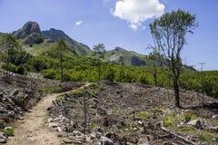 logging стоковая фотография rf